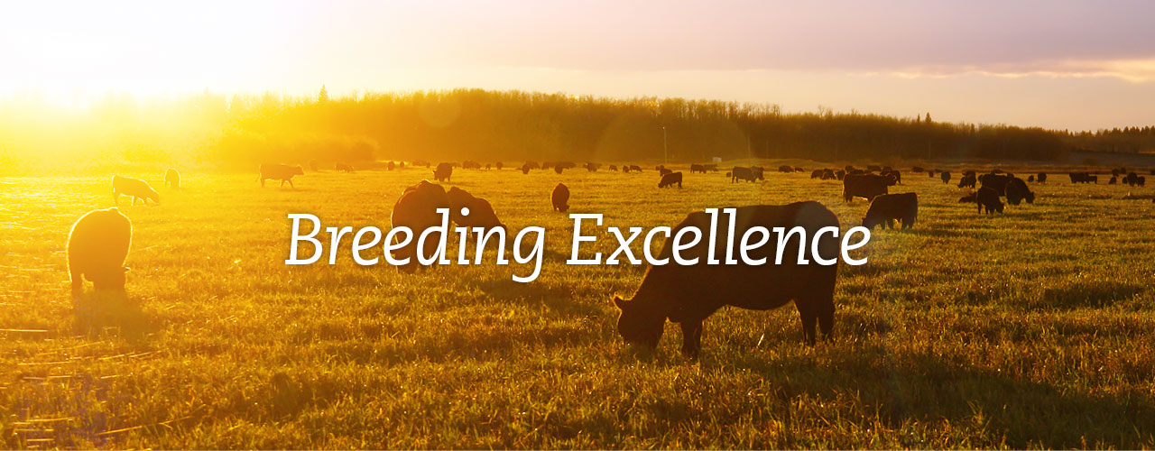 Breeding Excellence