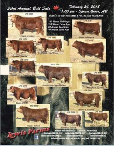 Red Simmental Bulls, Lewis Farms